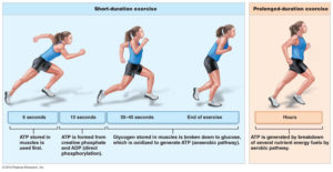Anaerobic-aerobic-exercise